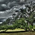 HDR Oak Tree artistic